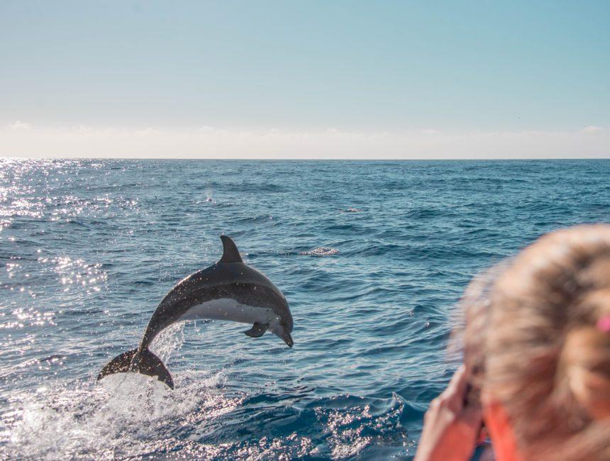 dolfijnen madeira