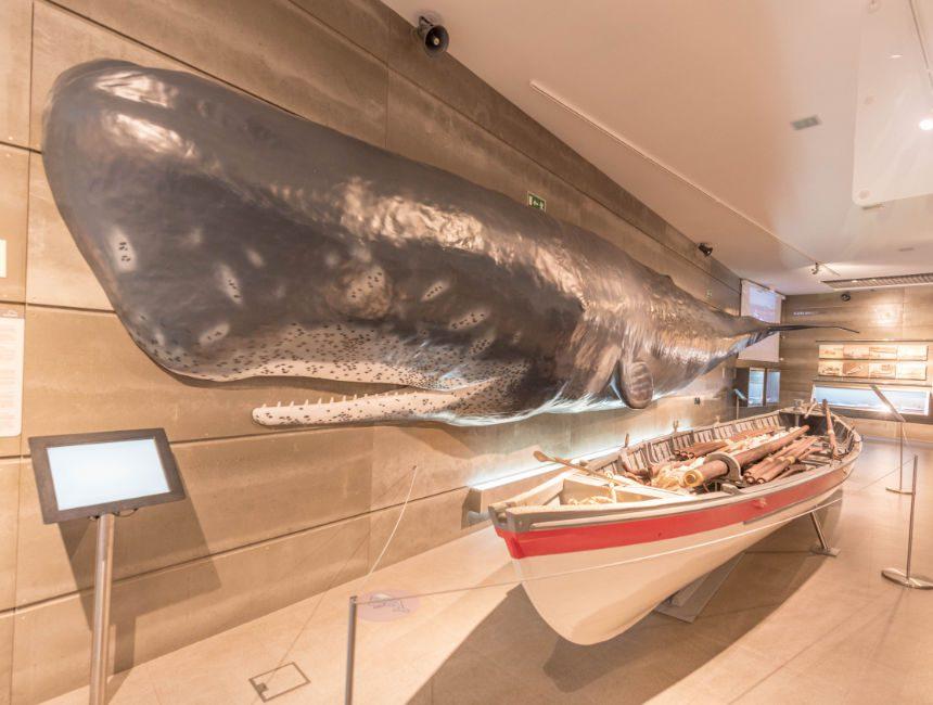 musea da baleia madeira