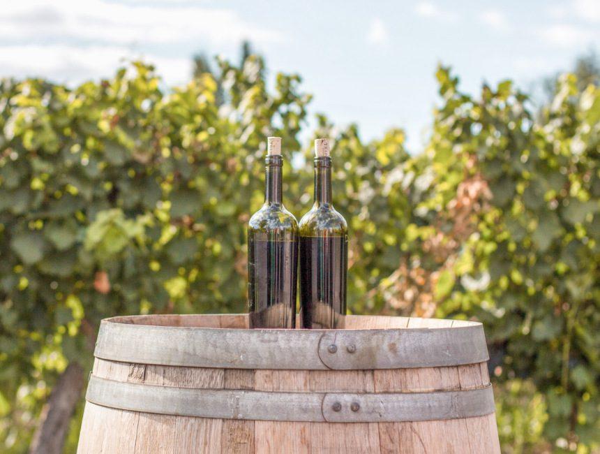 activiteiten omgeving Hasselt Cohlenberg wijndomein