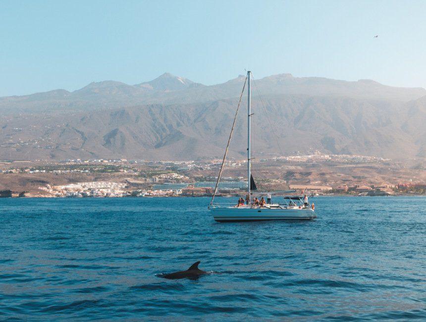 tenerife bezienswaardigheden costa adeje dolfijnen walvissen