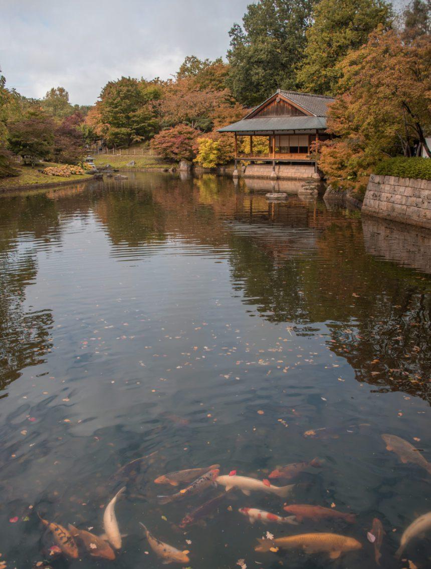 weekend Hasselt Japanse tuin