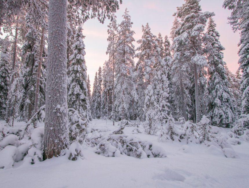 kerstman finland rovaniemi