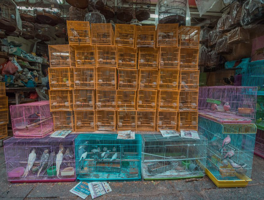 dingen om te doen in hong kong bird street garden