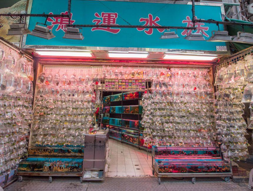 goldfish market hong kong bezienswaardigheden