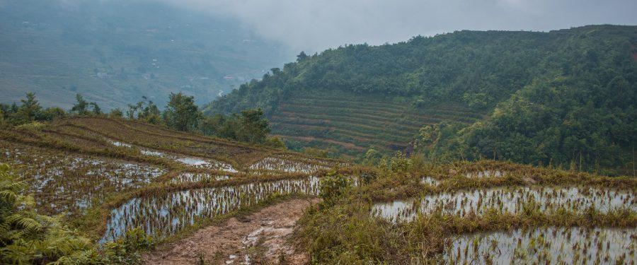 rijstterrassen Sap Vietnam reisgids