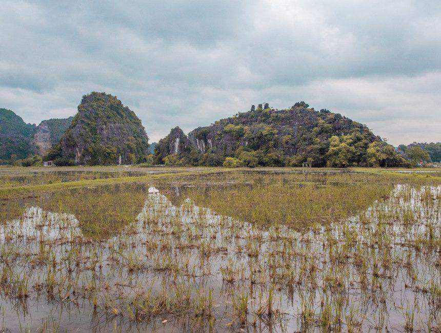 rijstvelden tam coc ninh binh