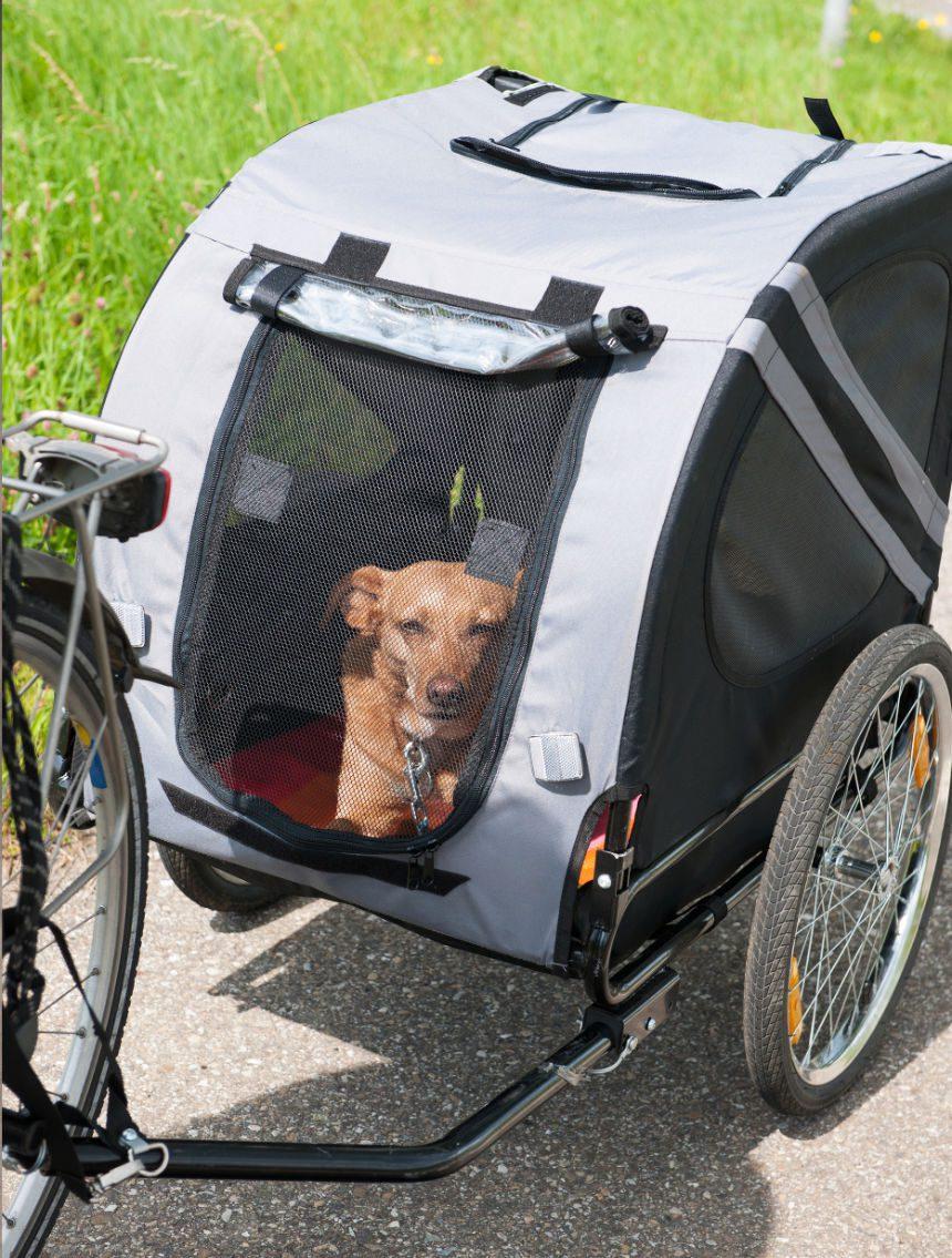 fietskar hond