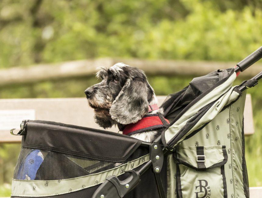 hondenwandelwagen