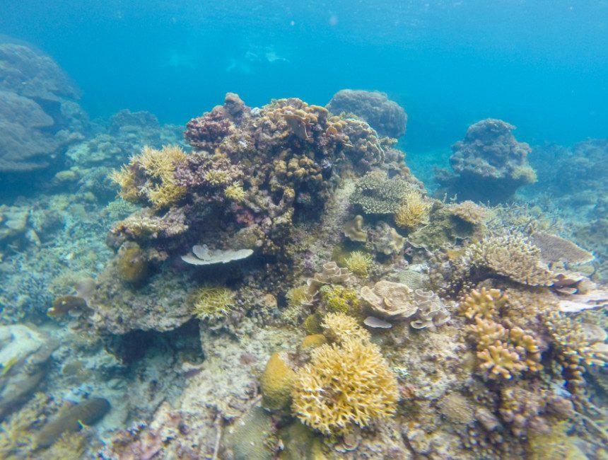 koraal filipijnen eilandhoppen