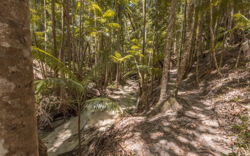 regenwoud fraser island jungle