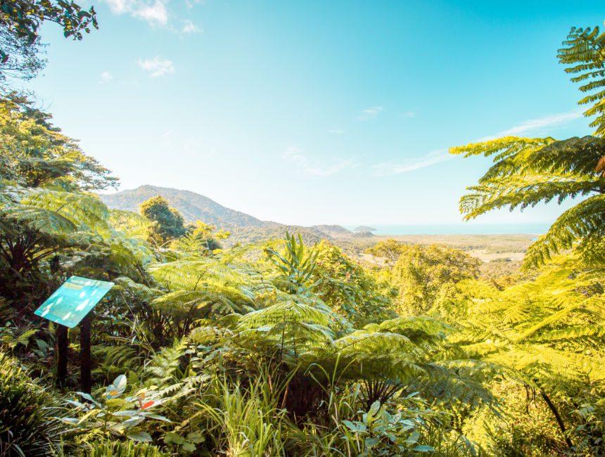 Daintree rainforest bezienswaardigheden Australië