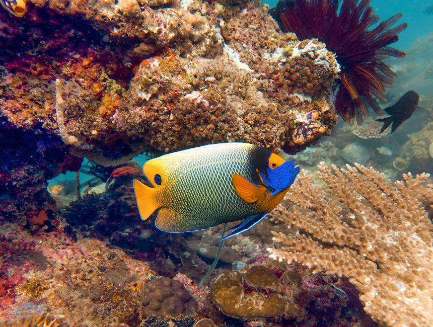 great barrier reef duiken australie dingen om te doen