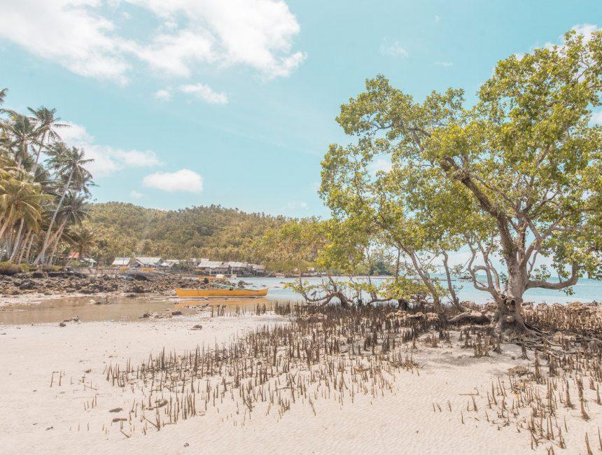 hoogtepunten filipijnen mangroven siargao