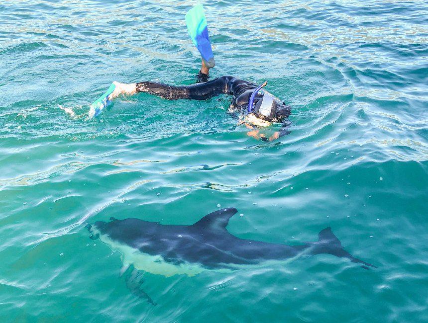 nieuw zeeland zwemmen met dolfijnen