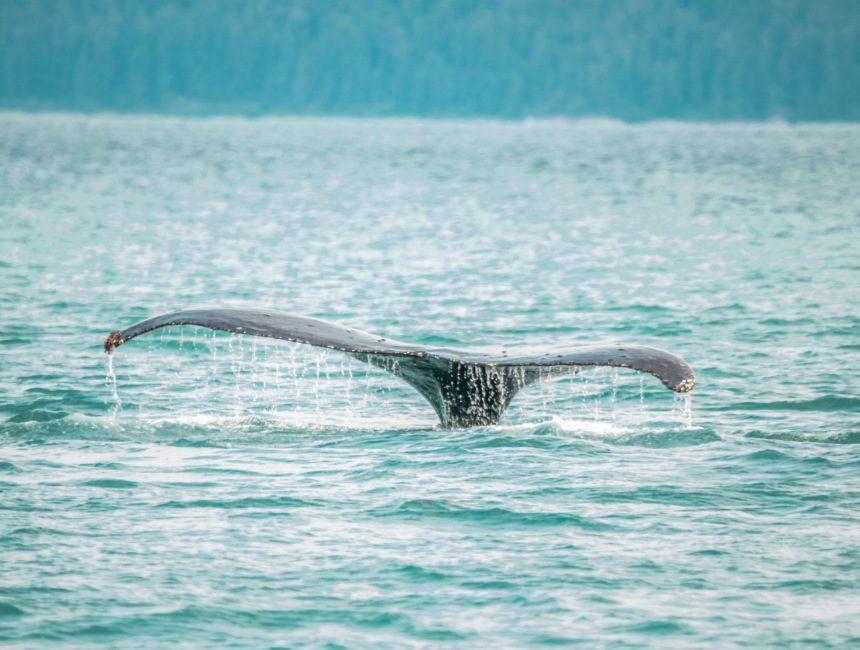 Walvissen Nieuw-Zeeland hoogtepunten