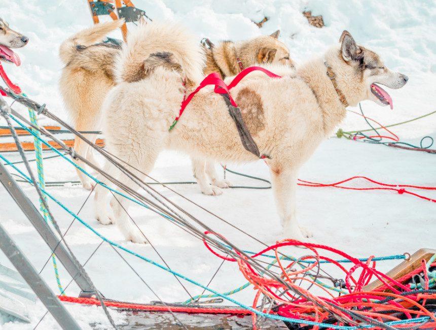 husky sleeën Valmeinier