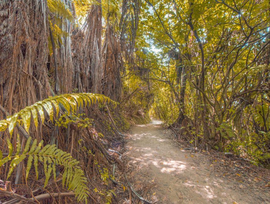 Abel Tasman National Park Nieuw-Zeeland rondreis