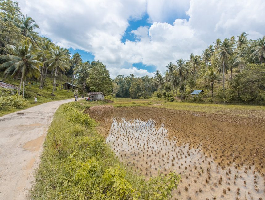 Bohol Filipijnen rondreis
