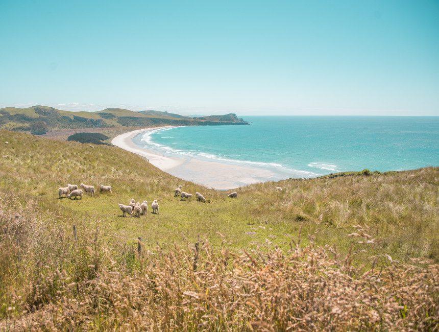Otago Peninsula Nieuw-Zeeland rondreis
