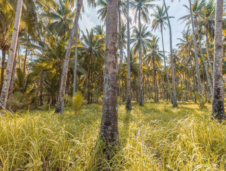 rondreis Filipijnen 14 dagen