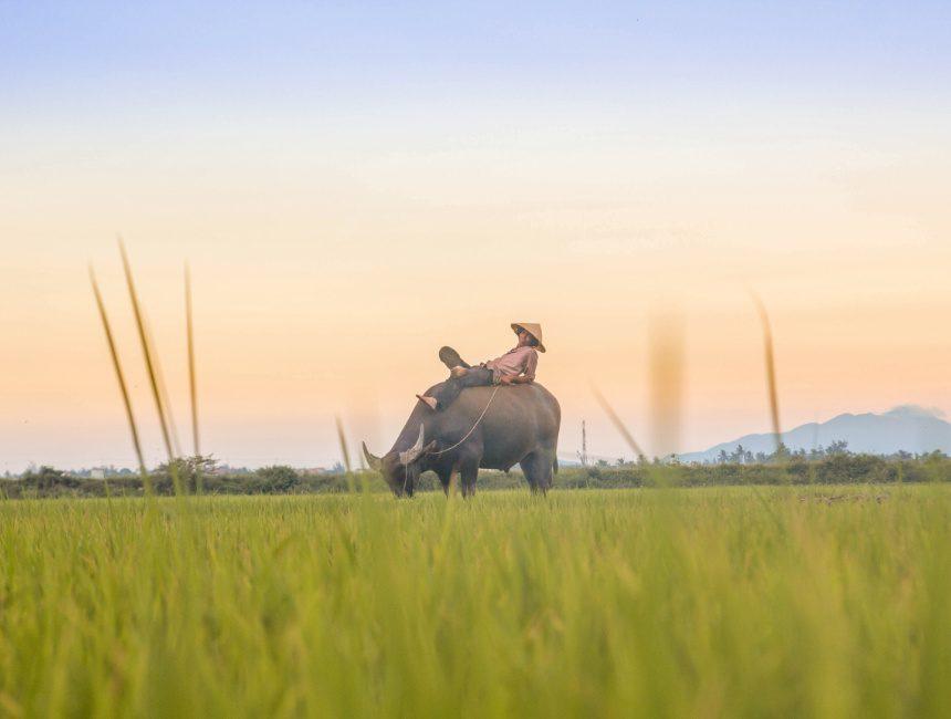 rondreis Vietnam vakantie