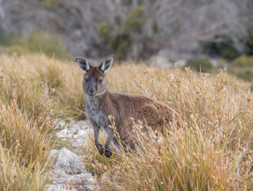 kangaroo island rondreis australie