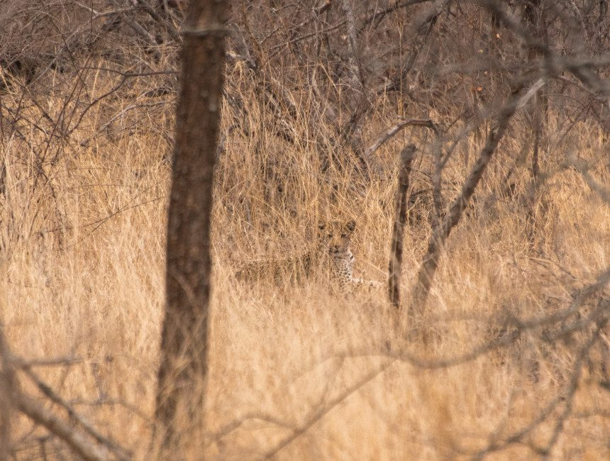 big five reservaat nDzuti Krugerpark