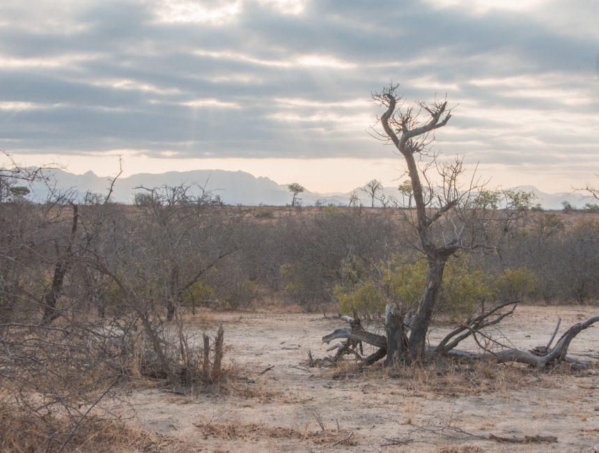 landschap Makalali Game Reserve