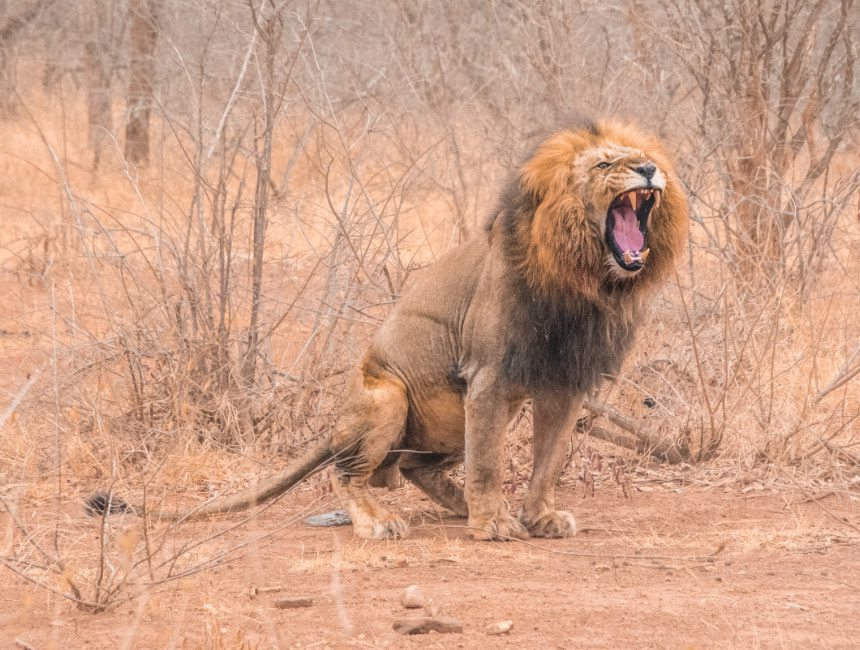 leeuw makalali private game reserve