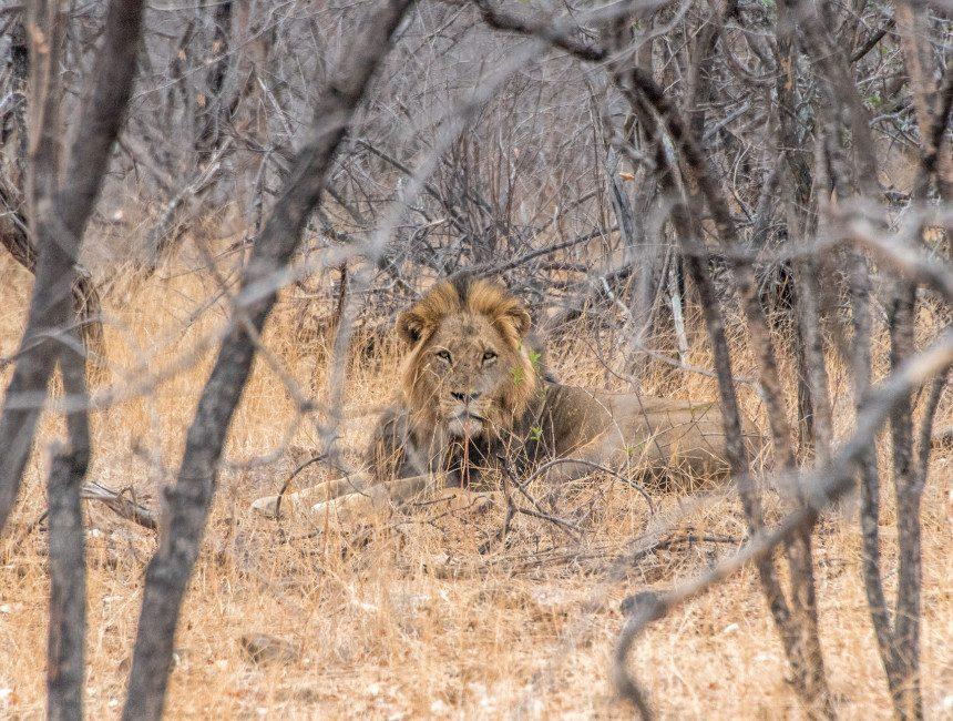 nDzuti overnachten Krugerpark