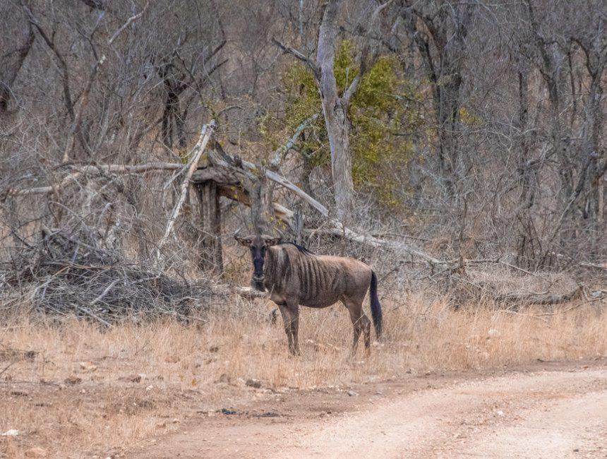 overnachten Krugerpark nDutzi