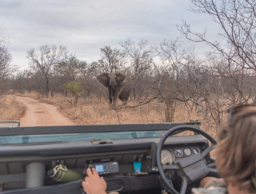 safari nDzuti Krugerpark