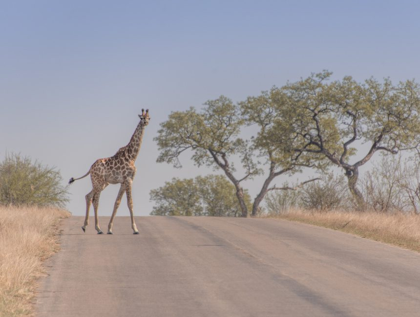 self drive safari Krugerpark