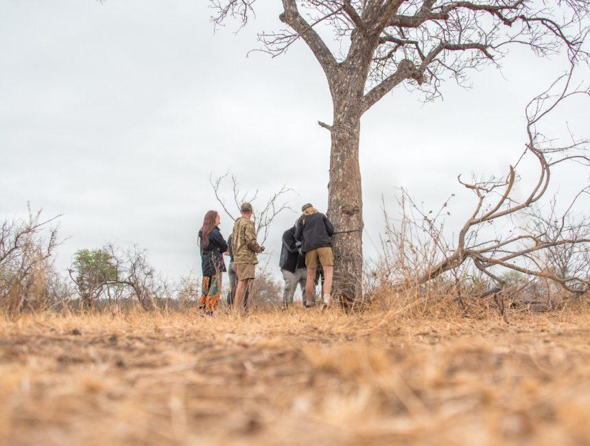 camera traps plaatsen vrijwilligerswerk afrika