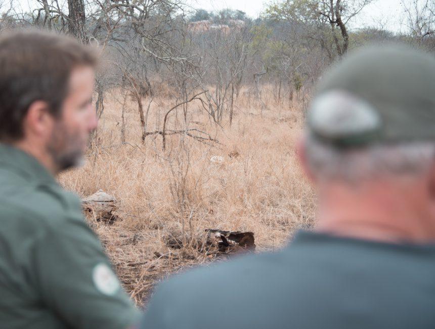 jachtluipaard vrijwilligerswerk in het buitenland siyafunda