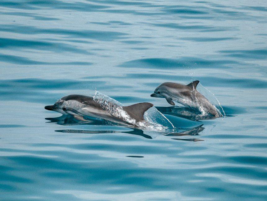 dolfijnen gran canaria