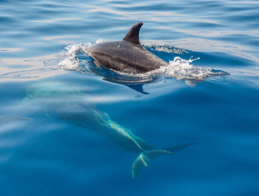 dolfijnen lanzarote