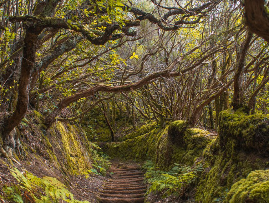 trail of senses wandeling tenerife rondreis
