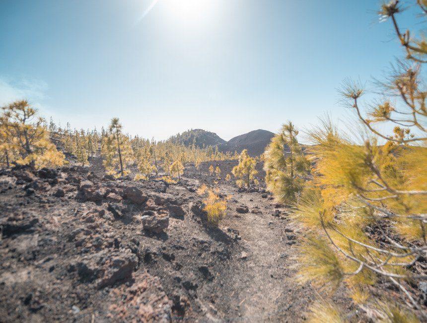 wandeling Montana de la Botija Teide