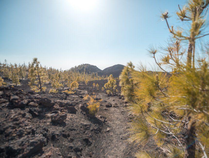 wandeling rond Montana de la Botija Teide nationaal park